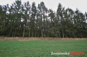 Prodej lesa