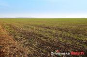 Prodej zemědělské půdy